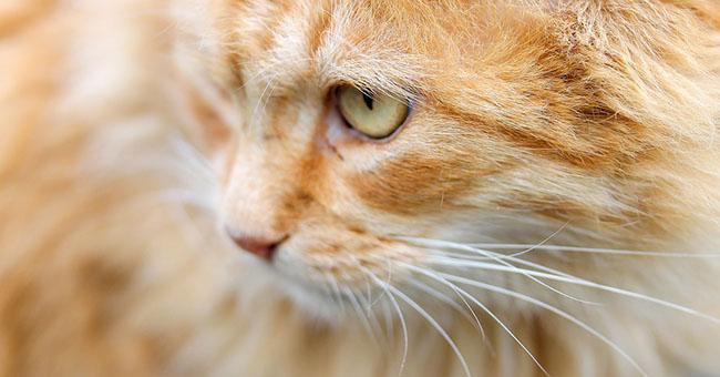 Trapani, dà una bastonata a un gatto: pena-record di quattro mesi