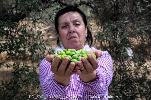 Slow Food fa squadra con la FAO per rilanciare l'agricoltura siriana