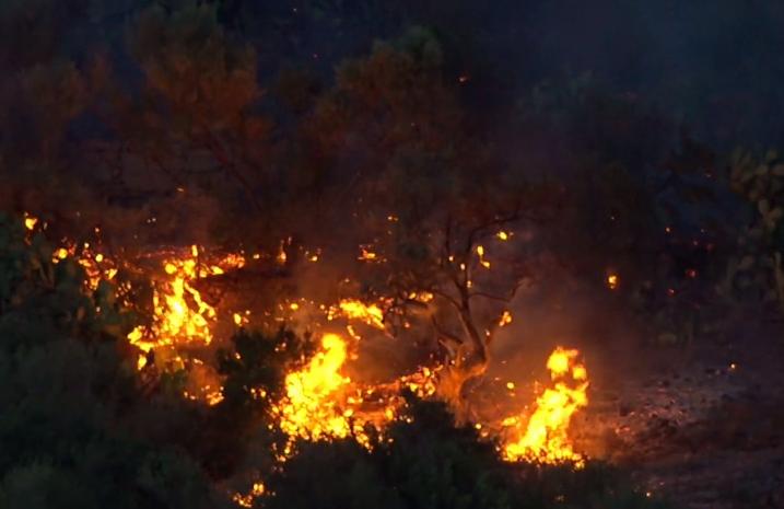 """Incendi. 7 punti risolutivi per Legambiente. Antonio David : """"Indispensabili i Forestali"""" !"""