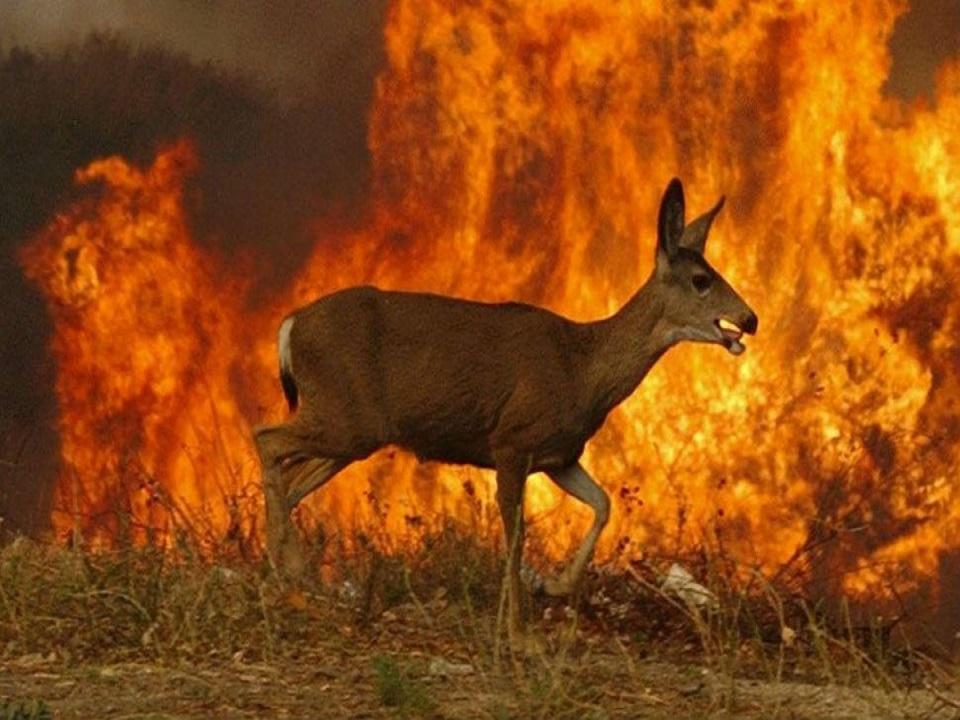 """""""coordinamento nazionale diritti umani"""" – Incendio Foresta Amazzonica"""