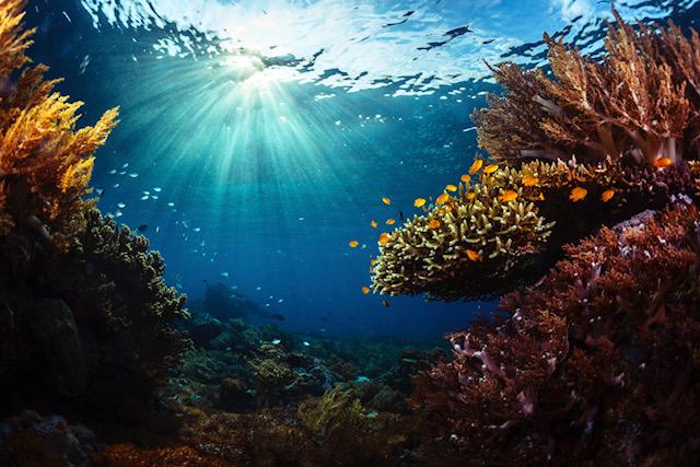 Cambiamento climatico e risorse ittiche: il commento di MSC al rapporto delle Nazioni Unite