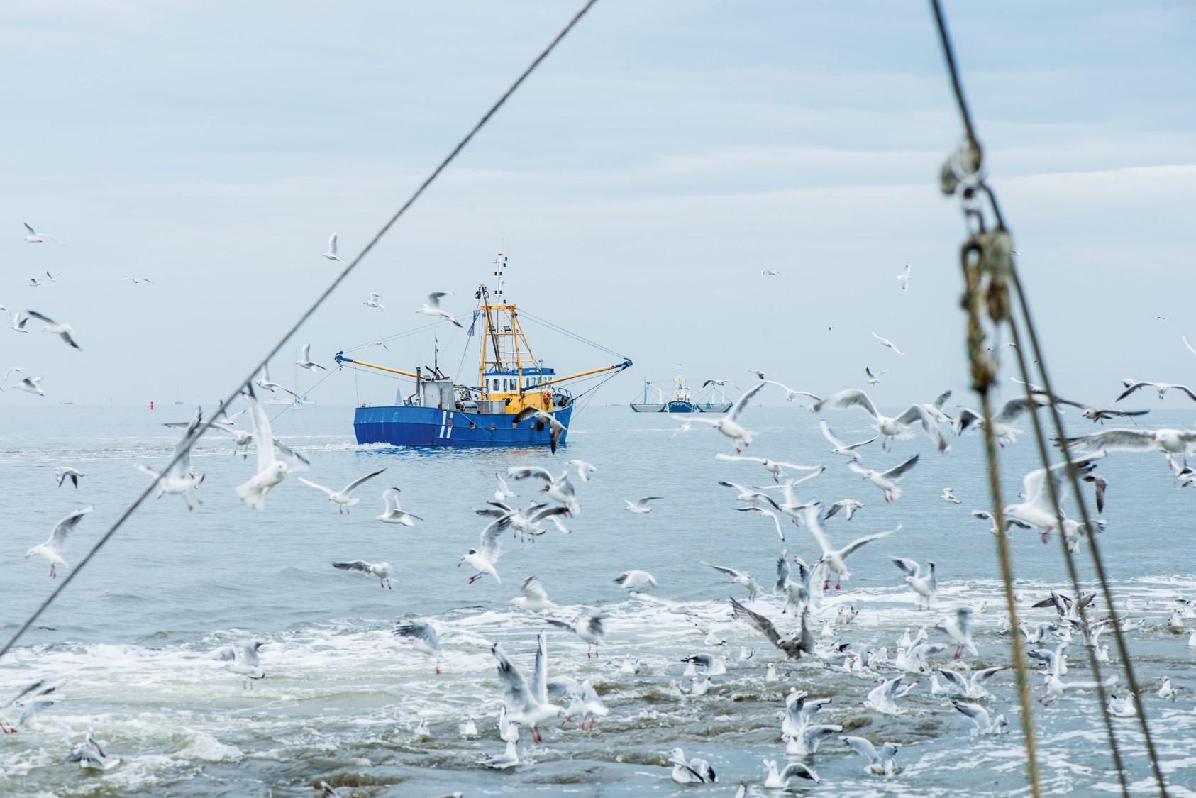 Annual Report MSC I progressi della Pesca Sostenibile