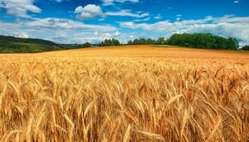 Salute pubblica –Grillo Morassutti: il governo regionale renda noti e segua l'uso di grani importati, troppo spesso nocivi. Domani presidio al porto di Catania