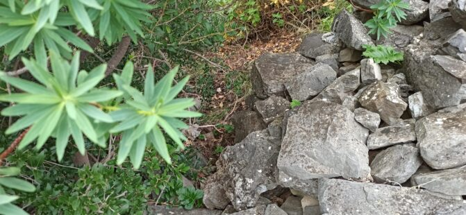 La Regione Sicilia si traveste da Robin Hood fregando 50€ al mese ai Forestali per rimpinguare le casse